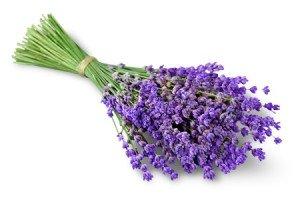 48216967 - lavender.