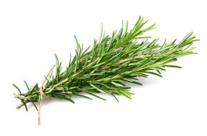 46621671 - fresh rosemary bunch isolated on white background